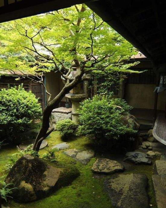 Small Japanese Courtyard With Moss And Greenery