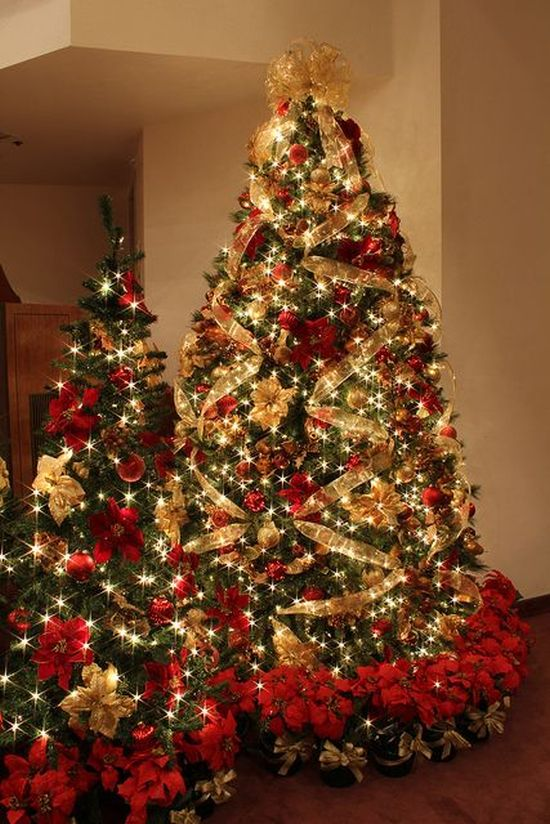 A Duo Of Christmas Trees Decorated In Gold And Red With Lots Of Lights Plus Ornaments And Lots Of Poinsettia