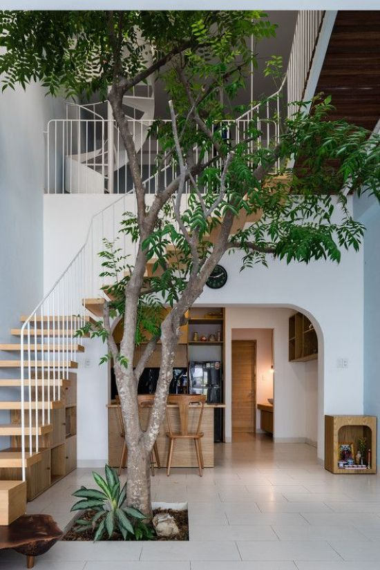 Indoor Courtyard Design Idea With A Real Living Tree
