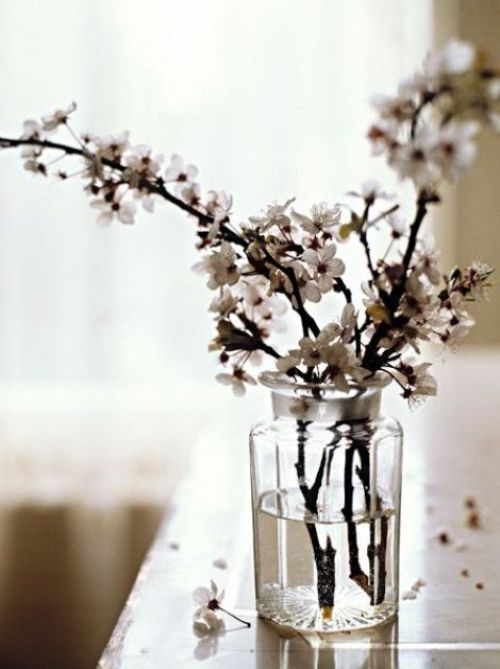 Spring Home Décor With White Blossom Branches In A Clear Vase
