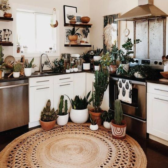 Boho Kitchen Décor With Potted Plants And Succulents