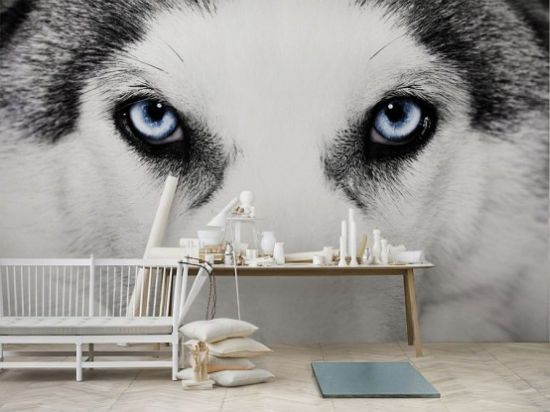 Living Room With A Husky Eyes Wall Mural