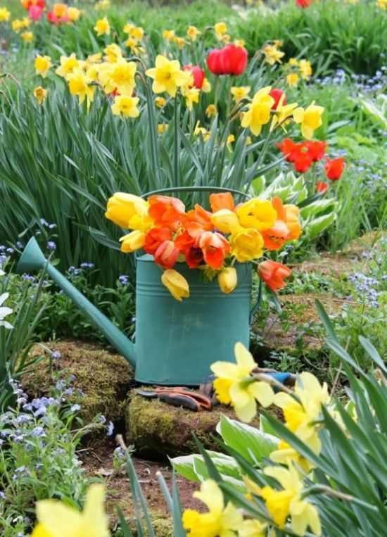 Spring Home Decor With Watering Can With Colorful Tulips